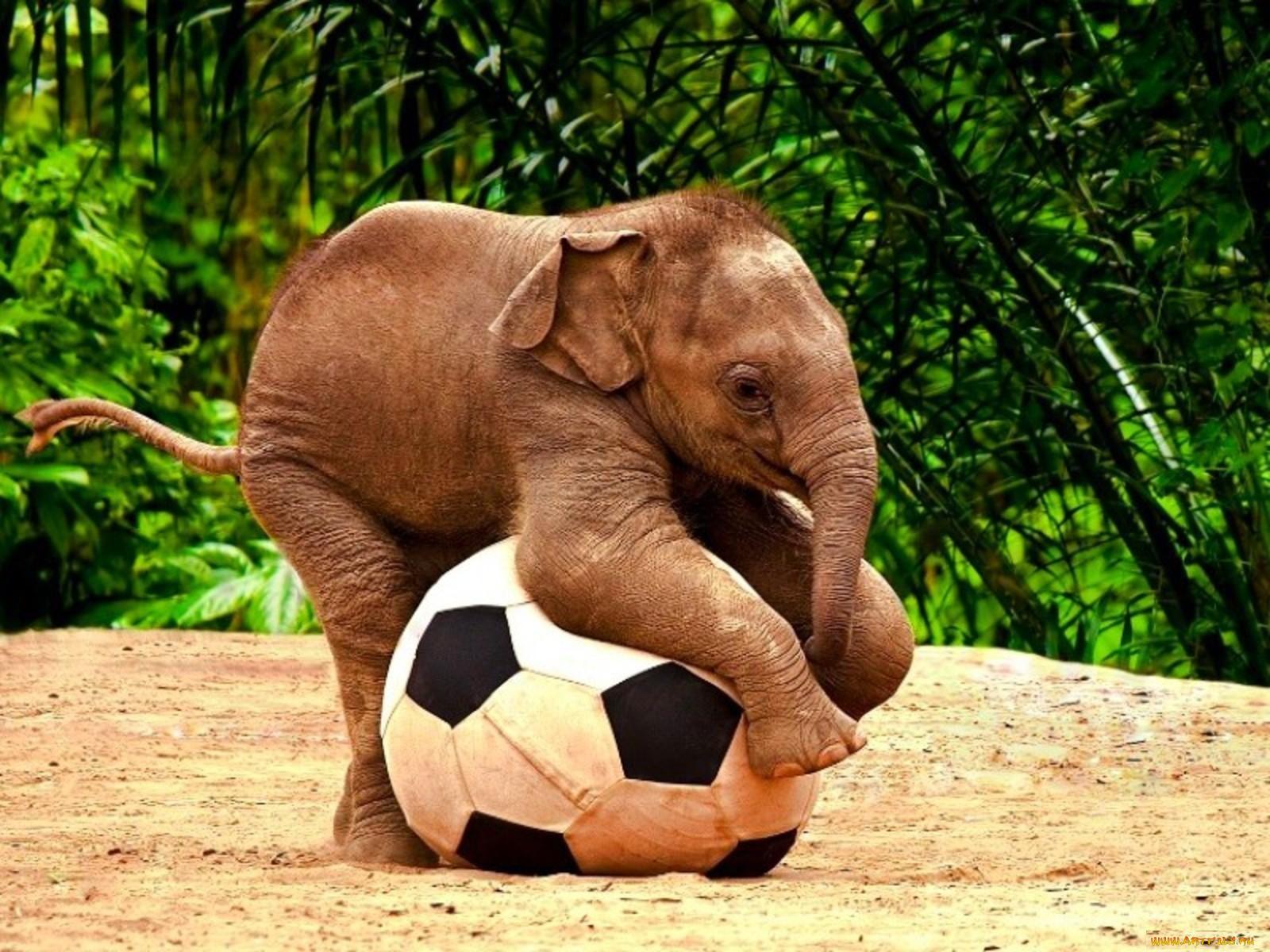 Смотреть смешного картинки про животных